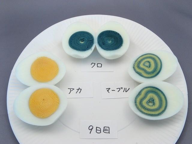実験9日目の卵