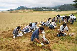 鳥取砂丘での除草