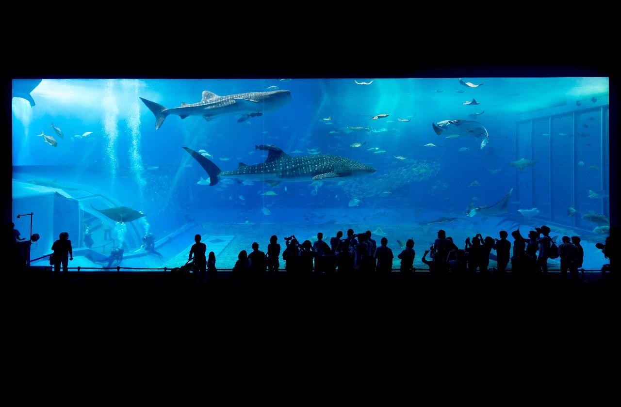 沖縄美ら海水族館の巨大水槽「黒潮の海」