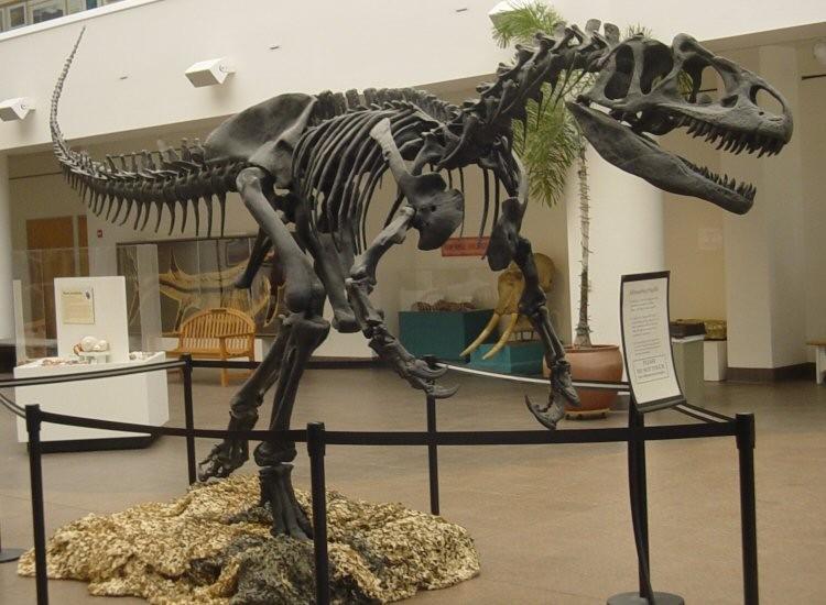 アロサウルスの全身骨格