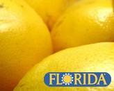 フロリダ産グレープフルーツ