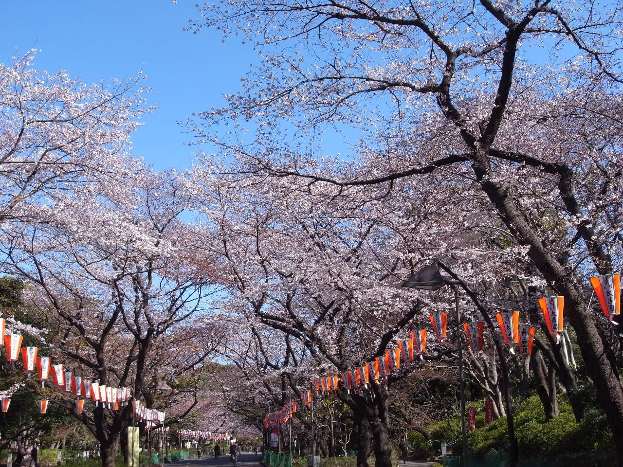 上野恩賜公園(うえの桜まつり)
