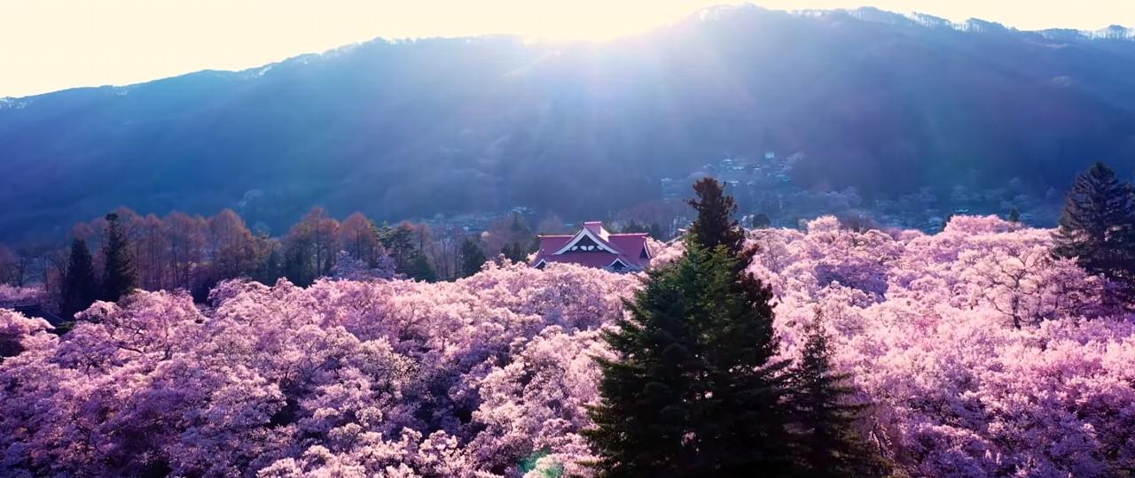 桜ドローンプロジェクト