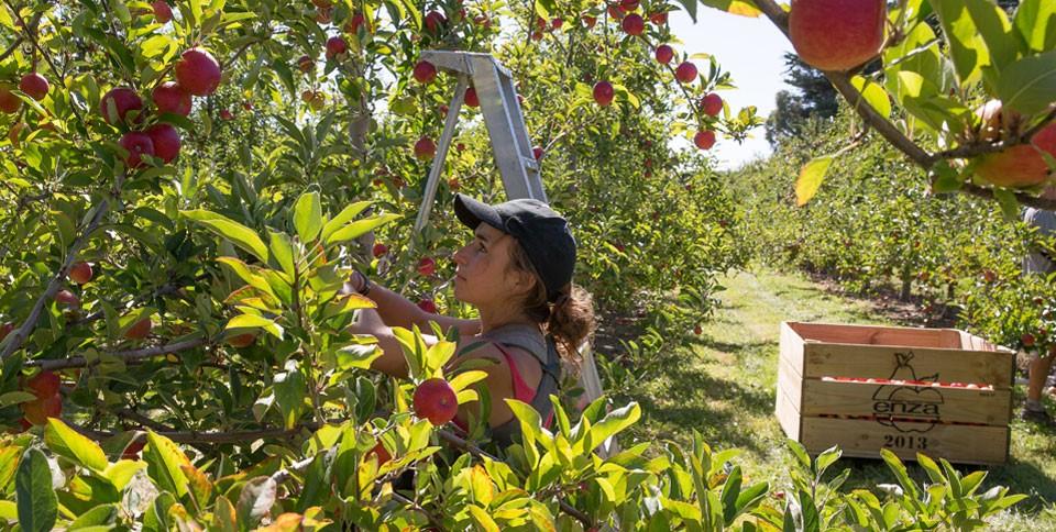 JAZZりんご果樹園