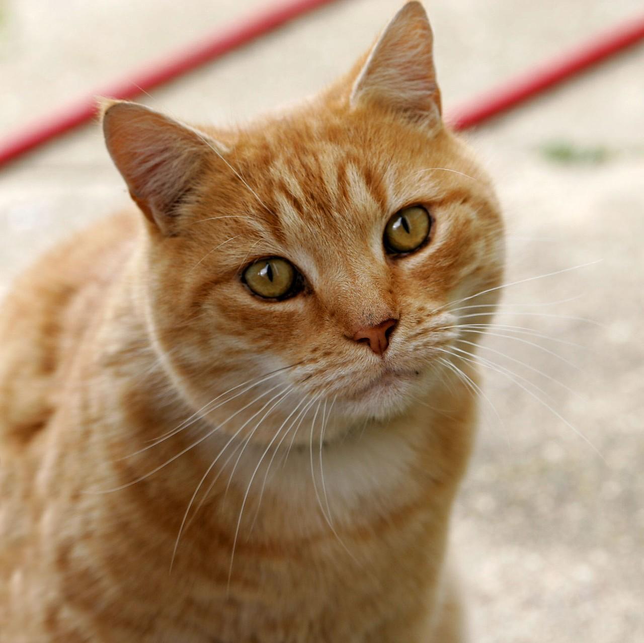 猫の日(2月22日 記念日) | 今日は何の日 | 雑学ネタ帳
